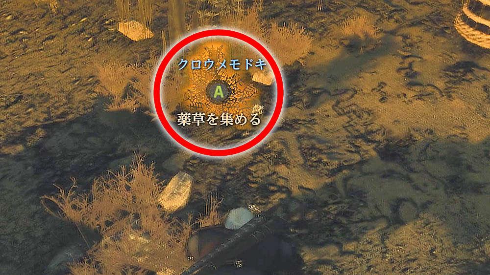 水中のクロウメモドキ - Witcher 3